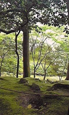 銀閣寺庭園①090528_1240~01