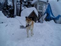 テルもこの大雪にはビックリ!