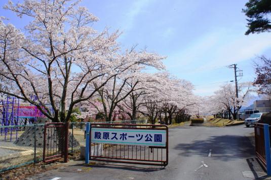 桜 殿原スポーツ公園 外観
