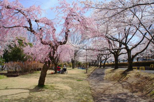 桜 殿原スポーツ公園 弁当