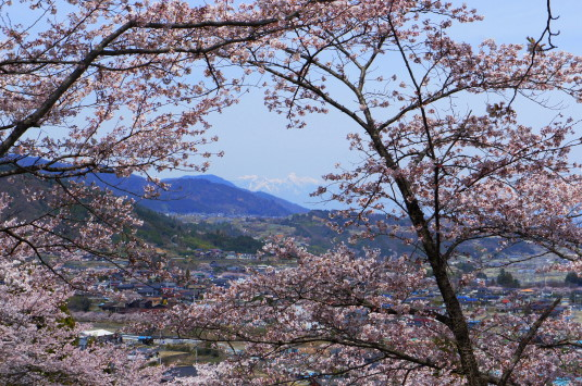 桜 殿原スポーツ公園 八ヶ岳