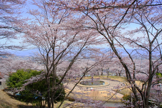 桜 殿原スポーツ公園 全体