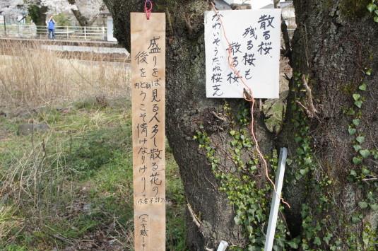 桜 塩之沢駅 謎のメッセージ