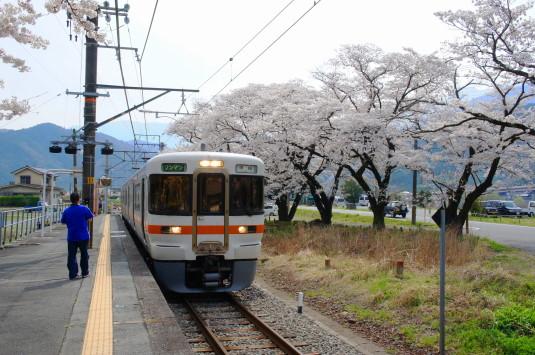 桜 塩之沢駅 電車