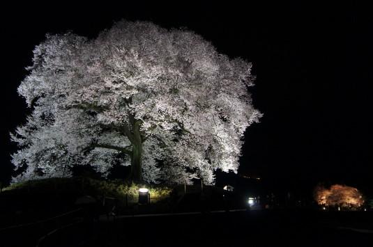 夜桜 わに塚 外観