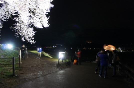 夜桜 わに塚 見物客