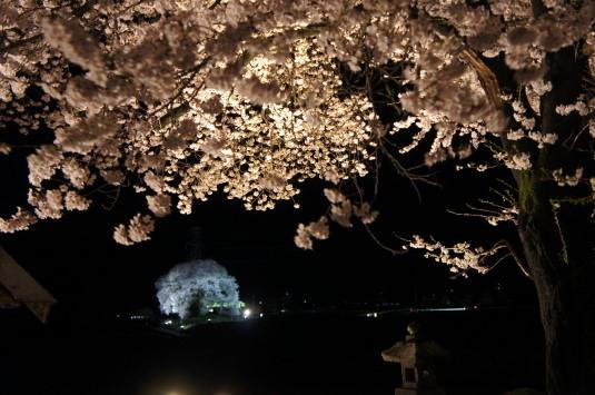 夜桜 わに塚 隣の桜とわに塚