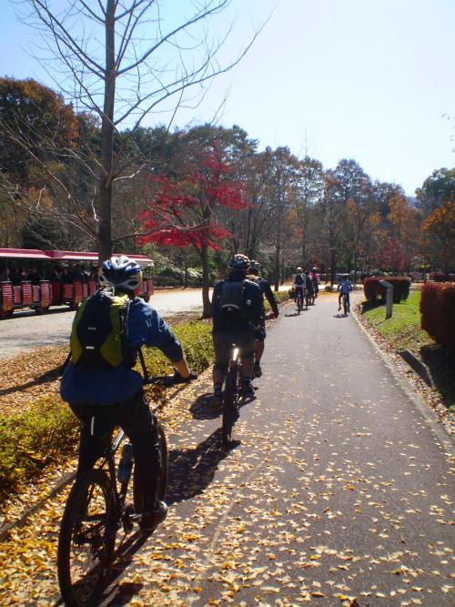 銀杏並木のサイクリングロード