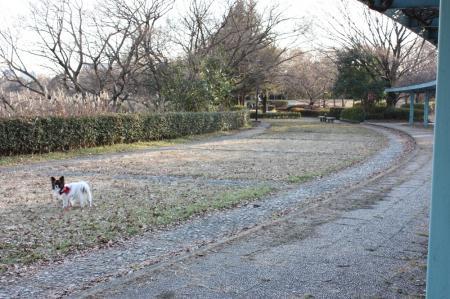 久喜菖蒲公園4
