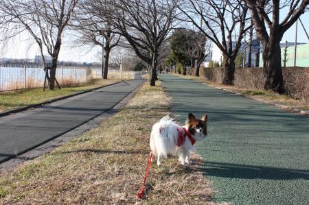 久喜菖蒲公園2