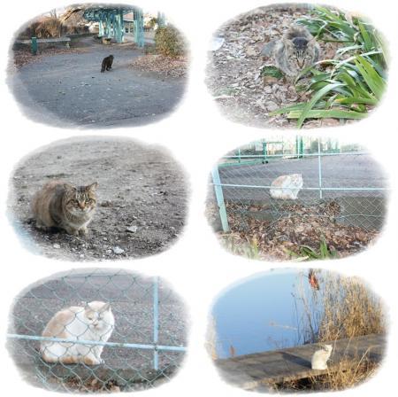 久喜菖蒲公園6