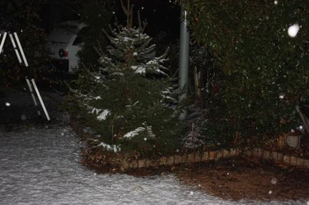 雪が降ってきました3