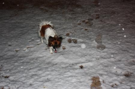 雪が降ってきました2