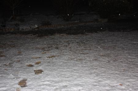 雪が降ってきました1