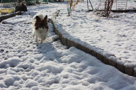 雪積もったよ5