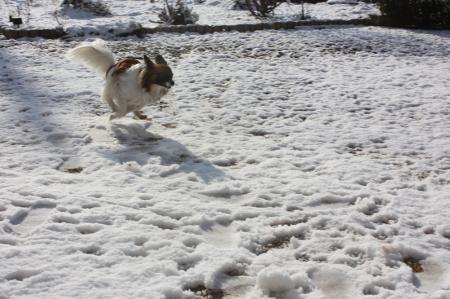 雪積もったよ4