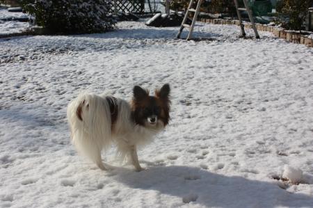 雪積もったよ2