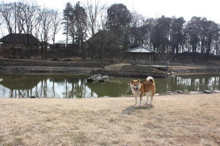 古河総合公園14