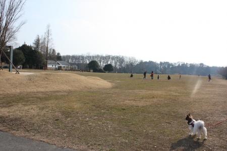 古河総合公園12