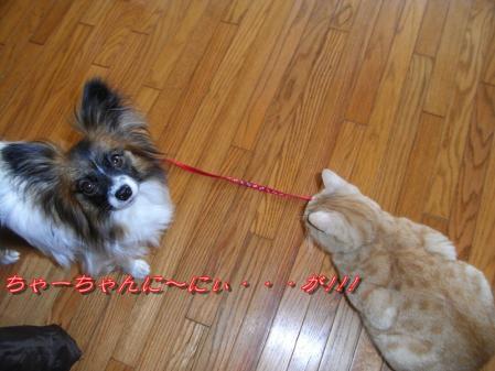 タヌキのお雛様!!!∑(゚ロ゚!1