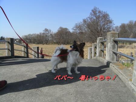 タヌキのお雛様!!!∑(゚ロ゚!8