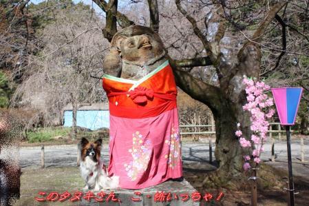 タヌキのお雛様!!!∑(゚ロ゚!9