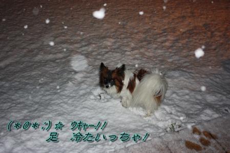 雪降る中で・・・((゚m゚;)アレマッ!3