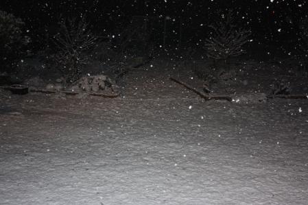 雪降る中で・・・((゚m゚;)アレマッ!1