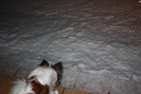 雪降る中で・・・((゚m゚;)アレマッ!2