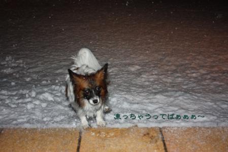 雪降る中で・・・((゚m゚;)アレマッ!4