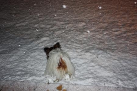 雪降る中で・・・((゚m゚;)アレマッ!6