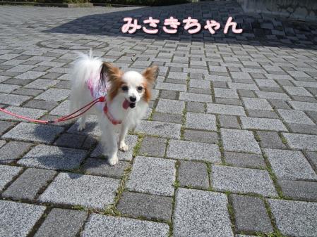 ぱぴ!ぱぴ!ぱぴ!パピヨン♪5