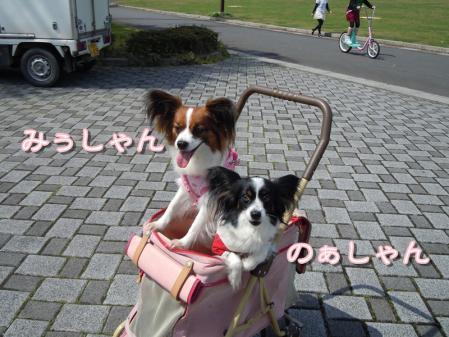 ぱぴ!ぱぴ!ぱぴ!パピヨン♪2