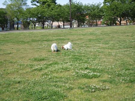初デート!? in公園3