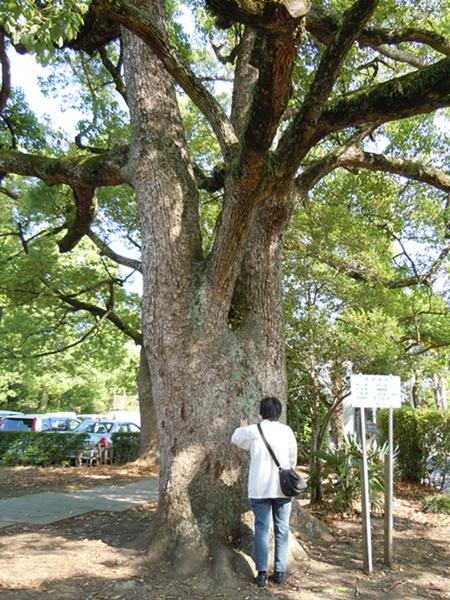 ドッグカフェと樹齢400年の藤9