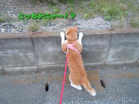 じい散歩7