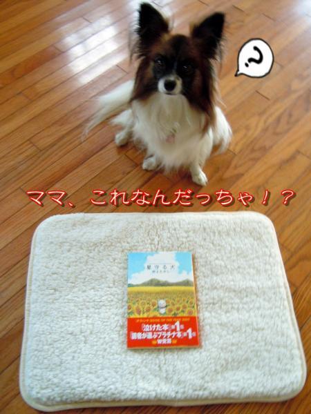 星守る犬1
