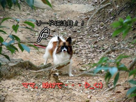 吉見百穴☆山登り編8