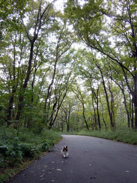 国営武蔵丘陵森林公園へ♪1