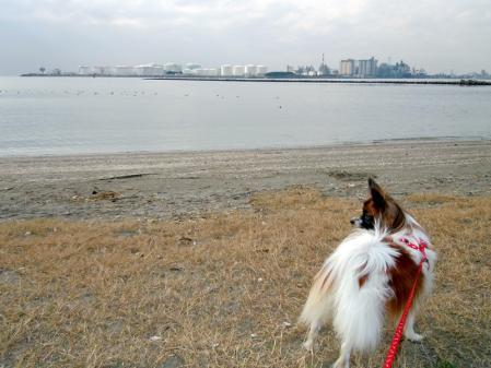 稲毛海浜公園と千葉ポートタワー9