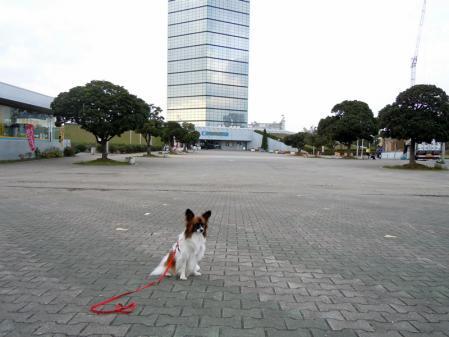 稲毛海浜公園と千葉ポートタワー8