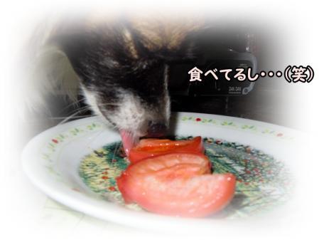 tomato・・・5