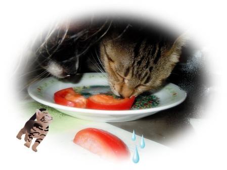 tomato・・・4