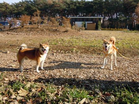 犬種いろいろ一緒にお散歩♪5
