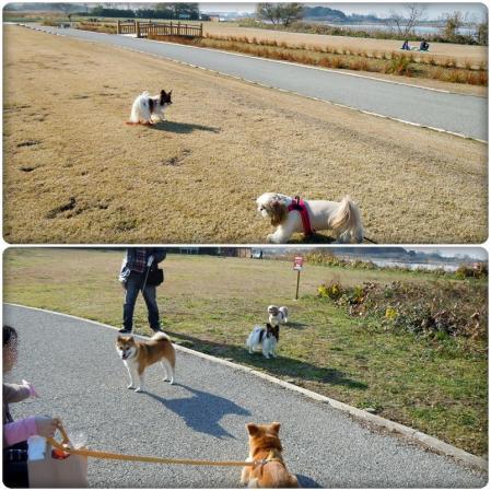 犬種いろいろ一緒にお散歩♪3