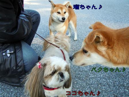 犬種いろいろ一緒にお散歩♪1