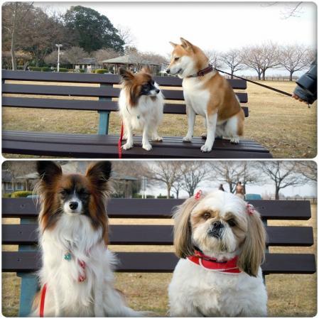 犬種いろいろ一緒にお散歩♪10