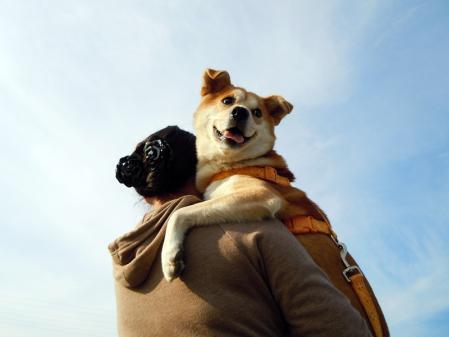 犬種いろいろ一緒にお散歩♪7