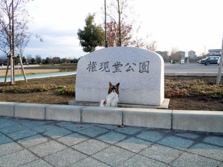 谷中湖と権現堂公園9