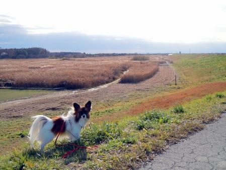 谷中湖と権現堂公園8